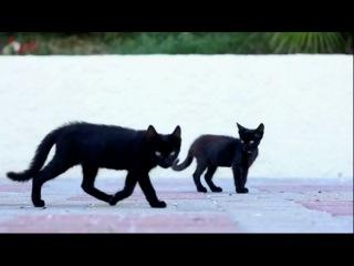Кот с эпичной походкой